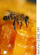 Пчела и мед. Стоковое фото, фотограф Александр Чиндяев / Фотобанк Лори