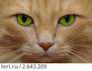Купить «Портрет рыжего кота», фото № 2643209, снято 11 июня 2011 г. (c) Александр Лебедев / Фотобанк Лори