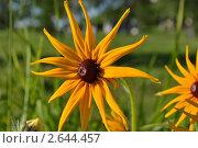 Купить «Желтый цветок», фото № 2644457, снято 29 июня 2011 г. (c) Хузахметова Венера / Фотобанк Лори