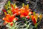 Ярко-красные лилии, фото № 2650345, снято 29 марта 2017 г. (c) Хайрятдинов Ринат / Фотобанк Лори