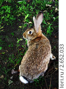 Кролик на травке. Стоковое фото, фотограф Елена Бабаина / Фотобанк Лори