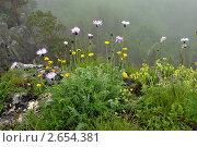 Купить «Горный пейзаж. Горный обрыв в тумане, во время дождя. Плато Лагонаке Кавказский хребет.», эксклюзивное фото № 2654381, снято 30 июня 2011 г. (c) Сергей Ганоцкий / Фотобанк Лори