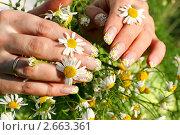 Купить «Женские руки с  маникюром и цветами ромашки», фото № 2663361, снято 28 июня 2011 г. (c) Татьяна Белова / Фотобанк Лори