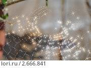 Фон из паутины со звездами. Стоковое фото, фотограф Elena Strigoun / Фотобанк Лори