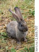 Купить «Кролик породы советский мардер», эксклюзивное фото № 2669797, снято 26 июня 2011 г. (c) Александра М. / Фотобанк Лори