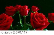 Купить «Красная роза», видеоролик № 2670117, снято 14 марта 2011 г. (c) Михаил Коханчиков / Фотобанк Лори