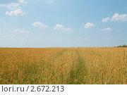 Пшеничное поле и голубое небо. Стоковое фото, фотограф Ирина Юрченкова / Фотобанк Лори