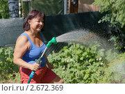 Купить «Женщина поливает в саду», фото № 2672369, снято 2 июля 2011 г. (c) Argument / Фотобанк Лори