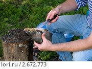 Мужчина чистит рыбу. Стоковое фото, фотограф Андрей Некрасов / Фотобанк Лори