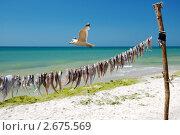 Морской пейзаж с чайкой и рыбой. Стоковое фото, фотограф Сергей Слабенко / Фотобанк Лори