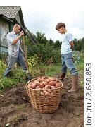 Купить «Сбор урожая картошки», эксклюзивное фото № 2680853, снято 28 августа 2010 г. (c) Мария Зубарева / Фотобанк Лори