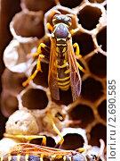 Купить «Осиное гнездо», фото № 2690585, снято 24 июля 2011 г. (c) Константин Тавров / Фотобанк Лори