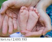 Пяточки 3-х месячной девочки в ладонях у ее мамы. Стоковое фото, фотограф Ольга Шабалкина / Фотобанк Лори