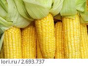 Кукурузные початки. Стоковое фото, фотограф Сергей Слабенко / Фотобанк Лори