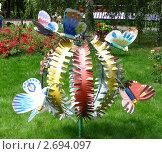 Цветок и бабочки (2011 год). Редакционное фото, фотограф Кашкарева Светлана / Фотобанк Лори