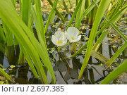 Телорез. Стоковое фото, фотограф Медведев Михаил / Фотобанк Лори