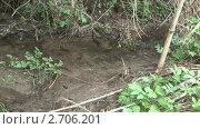 Купить «Лесной ручей», видеоролик № 2706201, снято 6 мая 2011 г. (c) Андрей Некрасов / Фотобанк Лори