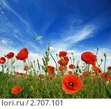 Купить «Поле цветущих маков», фото № 2707101, снято 12 июня 2011 г. (c) Алексей Сергеев / Фотобанк Лори