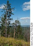 Сосны на фоне озера Танай. Стоковое фото, фотограф Олег Новожилов / Фотобанк Лори