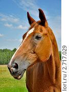 Портрет лошади на фоне неба. Стоковое фото, фотограф Алла Вовнянко / Фотобанк Лори