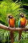 Попугаи с яркой окраской, фото № 2719337, снято 13 сентября 2010 г. (c) Elnur / Фотобанк Лори