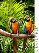 Купить «Попугаи с яркой окраской», фото № 2719337, снято 13 сентября 2010 г. (c) Elnur / Фотобанк Лори
