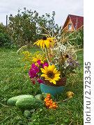 Купить «Натюрморт с цветами и овощами», фото № 2723345, снято 14 августа 2011 г. (c) Ольга Аристова / Фотобанк Лори