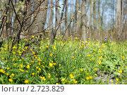 Весна. Стоковое фото, фотограф Евгений Лупанов / Фотобанк Лори