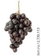 Гроздь черного винограда. Изолировано на белом. Стоковое фото, фотограф Антон Железняков / Фотобанк Лори