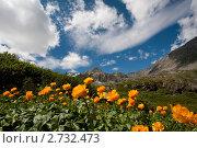 Купить «Алтай. Ущелье Большой Кулагаш», фото № 2732473, снято 9 июля 2011 г. (c) Ирина Яровая / Фотобанк Лори