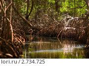 Купить «Мангровый лес. Национальный парк Ла Рестинга, остров Маргарита, Венесуэла», фото № 2734725, снято 4 апреля 2011 г. (c) Ольга Сапегина / Фотобанк Лори