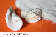 Морские ракушки и песок на оранжевом фоне. Стоковое фото, фотограф Сиверина Лариса Игоревна / Фотобанк Лори