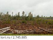 На месте незаконной вырубки. Стоковое фото, фотограф Виктор Карасев / Фотобанк Лори