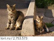 Два кота отдыхают. Стоковое фото, фотограф Наталия Солодова / Фотобанк Лори