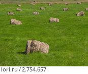 Тюки сена на зеленом лугу. Стоковое фото, фотограф Ирина Борсученко / Фотобанк Лори