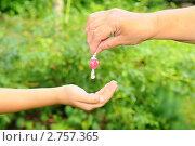 Купить «Рука, дающая конфету», эксклюзивное фото № 2757365, снято 20 августа 2011 г. (c) Юрий Морозов / Фотобанк Лори