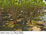 Белокопытник. Стоковое фото, фотограф Медведев Михаил / Фотобанк Лори