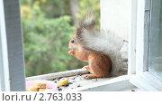 Купить «Белка ест семечки и банан», видеоролик № 2763033, снято 7 декабря 2010 г. (c) Кирилл Трифонов / Фотобанк Лори