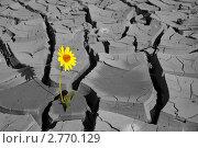 Купить «Цветок на потрескавшейся земле», фото № 2770129, снято 1 августа 2011 г. (c) Карелин Д.А. / Фотобанк Лори