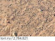Купить «Следы птиц на песке», фото № 2784821, снято 2 января 2011 г. (c) Анастасия Золотницкая / Фотобанк Лори