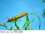 Гусеница. Стоковое фото, фотограф Алёна Новожилова / Фотобанк Лори
