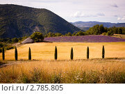 Прованс, лавандовое поле (2011 год). Стоковое фото, фотограф Архипова Мария / Фотобанк Лори