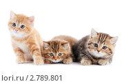 Купить «Котята», фото № 2789801, снято 22 октября 2018 г. (c) Дмитрий Калиновский / Фотобанк Лори