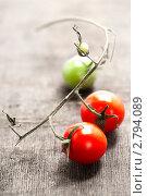 Купить «Свежие помидоры на ветке», фото № 2794089, снято 1 декабря 2010 г. (c) Наталия Кленова / Фотобанк Лори