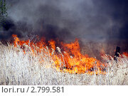 Красный петух. Стоковое фото, фотограф Пушкина Ольга / Фотобанк Лори