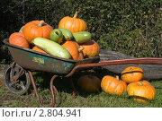 Тыквы и кабачки в садовой тачке. Стоковое фото, фотограф Екатерина Жукова / Фотобанк Лори