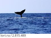 Купить «Хвост горбатого кита», фото № 2815489, снято 3 февраля 2010 г. (c) Julia Danilova / Фотобанк Лори
