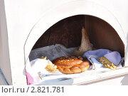 Пирог в печи. Стоковое фото, фотограф Серебрякова Анастасия / Фотобанк Лори