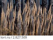 Сухая трава. Забор. Стоковое фото, фотограф Марина Зимина / Фотобанк Лори