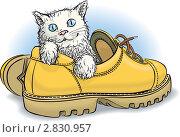 Купить «Котенок в ботинке», иллюстрация № 2830957 (c) Антон Гриднев / Фотобанк Лори